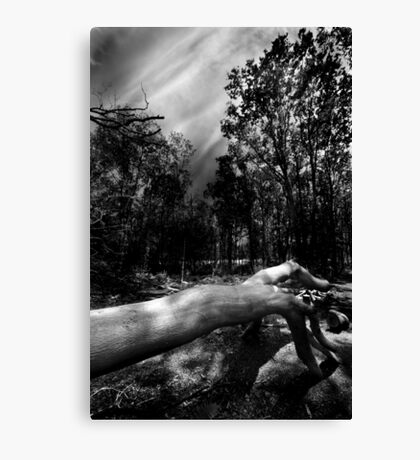 There's Something In The Woods Canvas Print