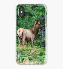Young Elk at Rocky Mountain National Park iPhone Case