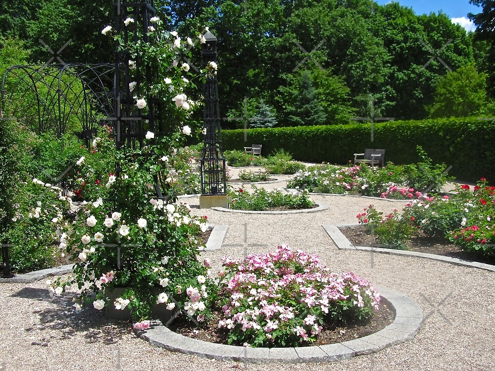 The Rose Garden, Rideau Hall, Ottawa, ON Canada by Shulie1