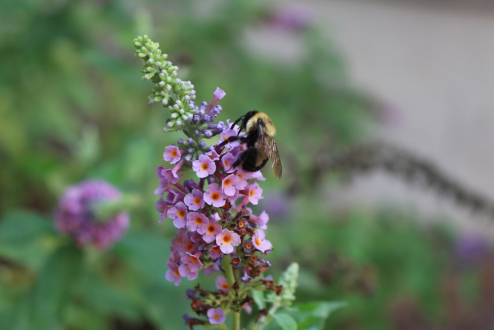 Bumble on a Butterfly Bush by sgejji