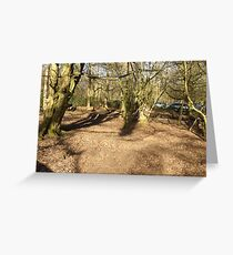 Forest, Jungle  Greeting Card