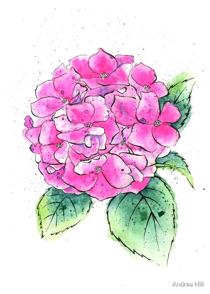Watercolor Painting of a Hydrangea Spring  by Andrea Hill