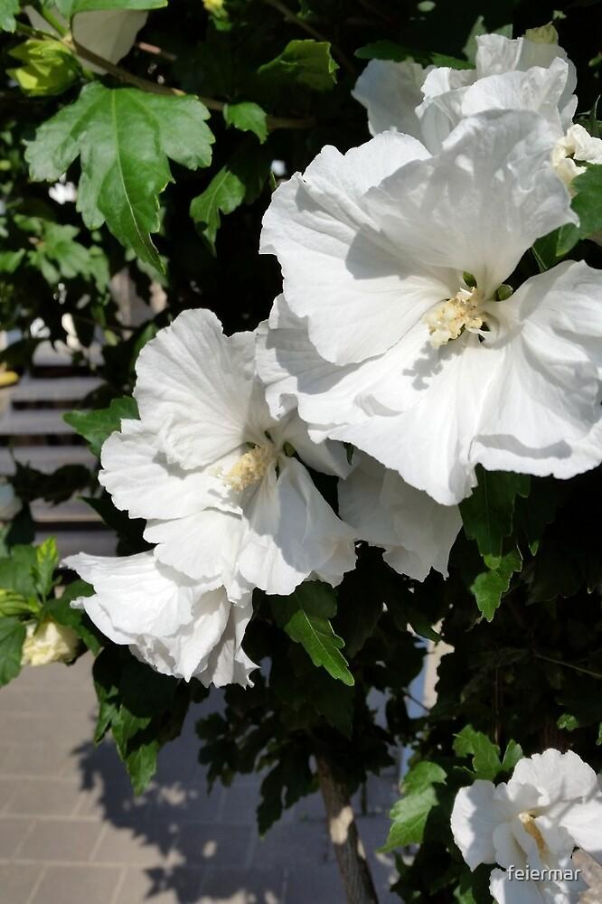 welcoming white flowers by feiermar