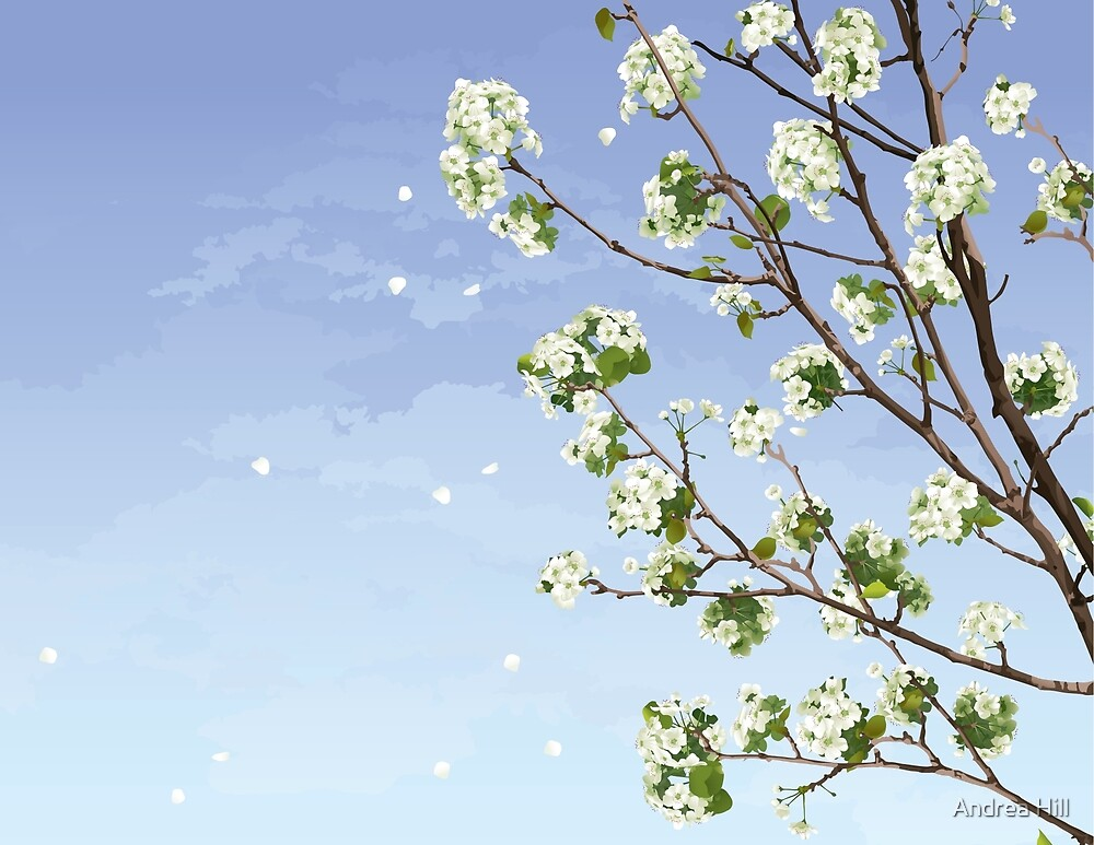 White Cherry Blossoms  by Andrea Hill