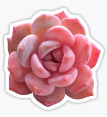 Red/pink succulent plant Sticker