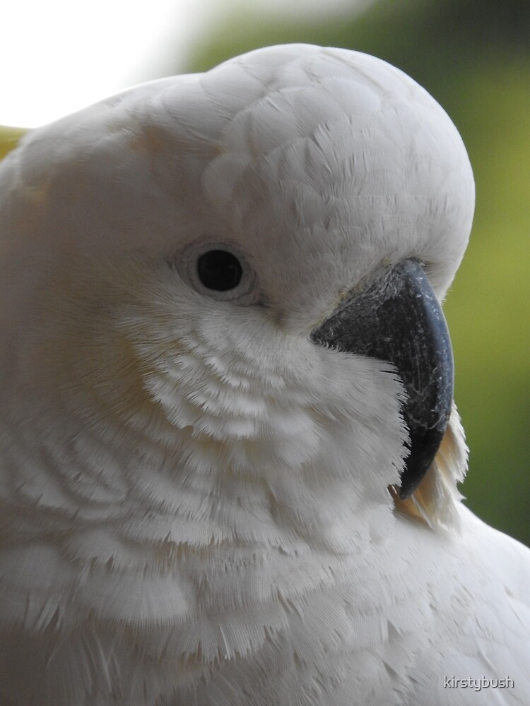 Sulphur Crested Cockatoo by kirstybush