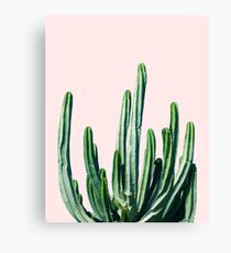 Cactus V6 #redbubble #lifestyle Canvas Print