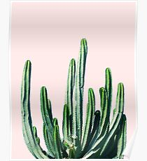 Cactus V6 #redbubble #lifestyle Poster