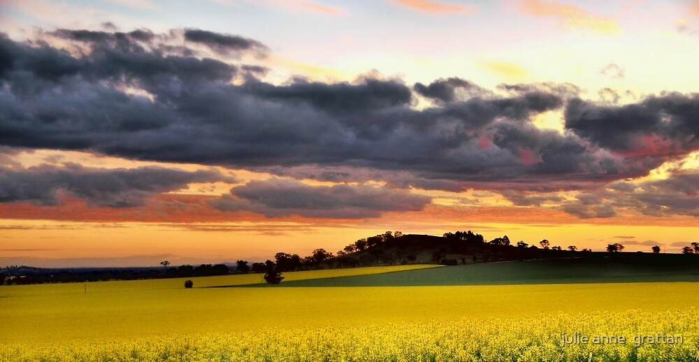 Canola Sunset by julie anne  grattan