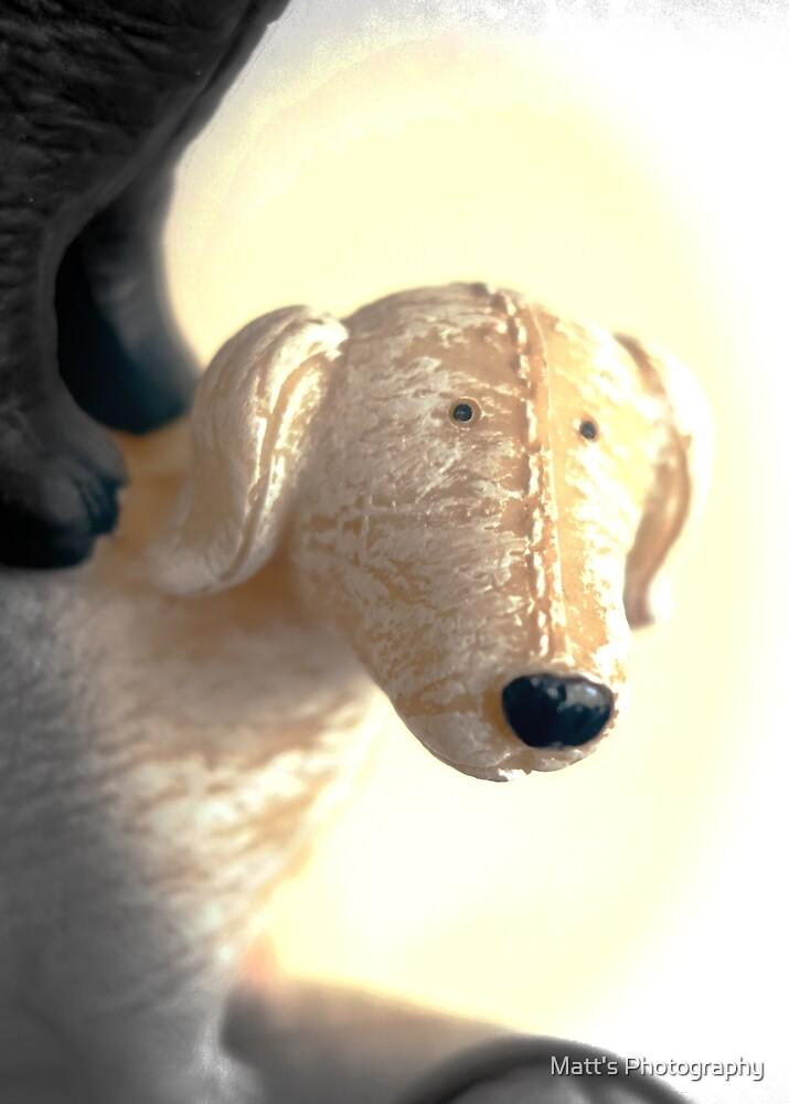 Whimsical Dog  by Matt's Photography