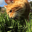 Ginger cat eating grass in garden by turniptowers