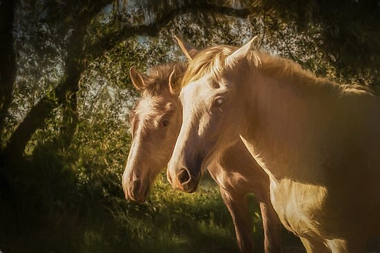Two Andalusian horses in the early morning by peter hayward