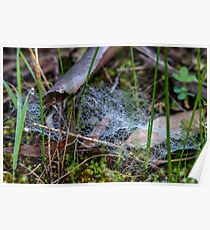 Dewy Ground Web Poster