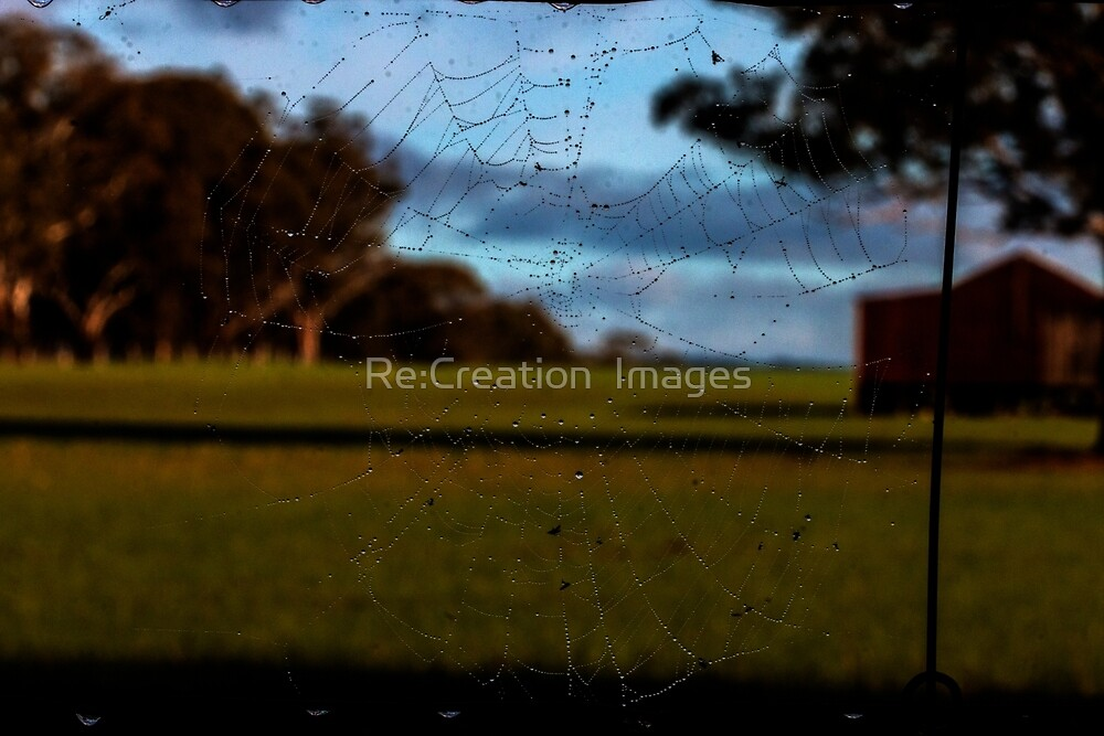 Looking Through the Web by Re:Creation  Images