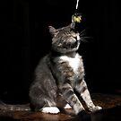 Ticklish cat by turniptowers
