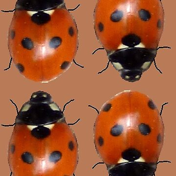 Lotsa Ladybirds - brown by ShmooberryPie