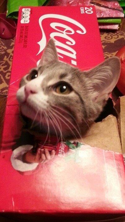 Mitzi in Coke Box by Tailtopaw