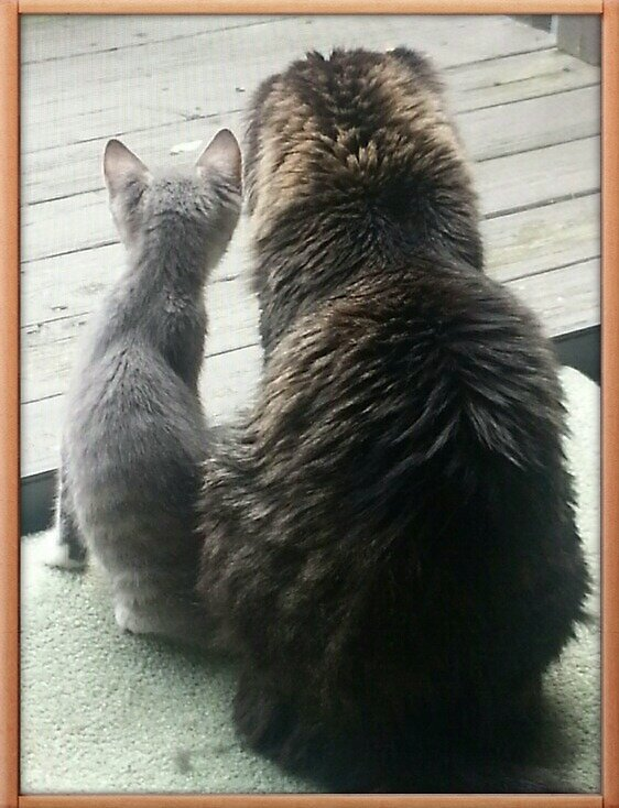 Mitzi and Asland at Window by Tailtopaw