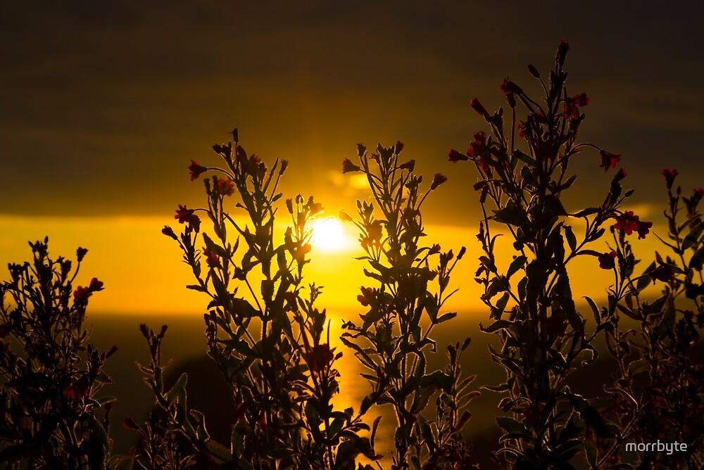 wild atlantic way sunset through wild flowers by morrbyte