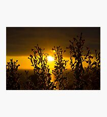 wild atlantic way sunset through wild flowers Photographic Print