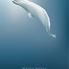 Beluga whale swimming under the cold arctic blue ocean by Diana Hlevnjak