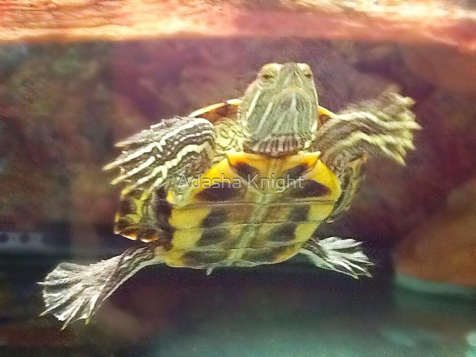 Mr Turtle is Tired by Adasha Knight