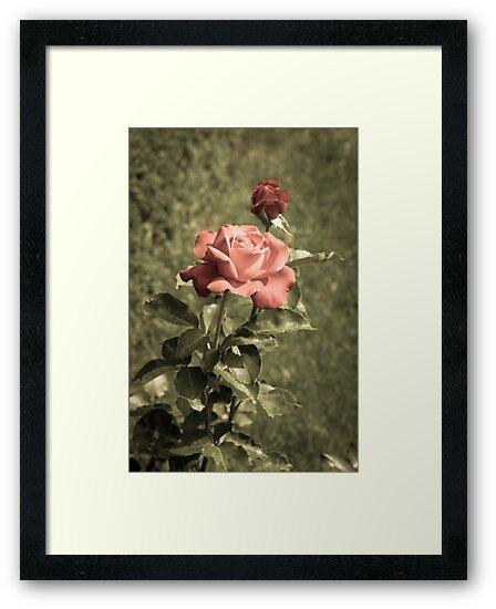 Garden of Roses by unikatdesign