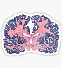 Gyri and Swirls of Human Brain Sticker