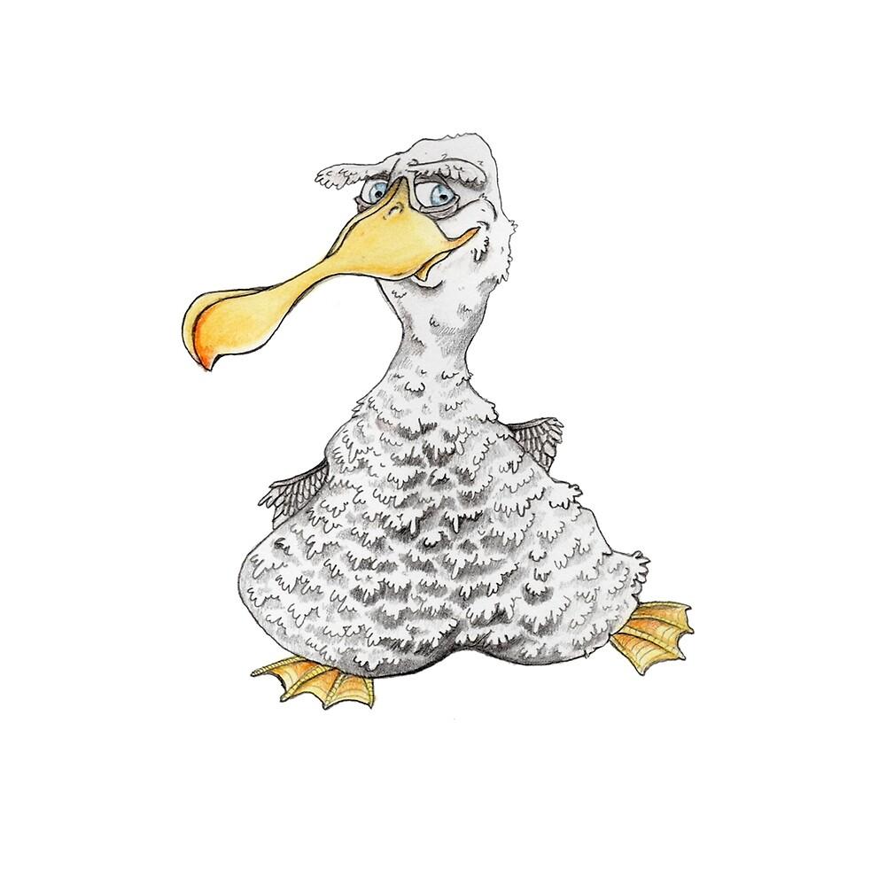 Seagull by Danny Boy