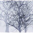 Winter in The Garden of Eden by Alex Preiss