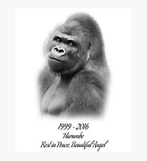 Rest in Peace, Harambe Photographic Print