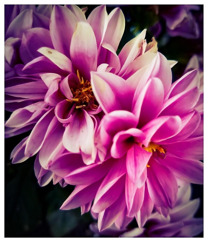 Flower 7 by MBNerd2003