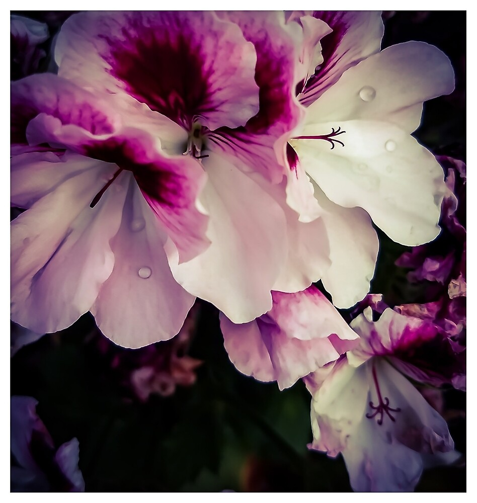 Flowers by MBNerd2003