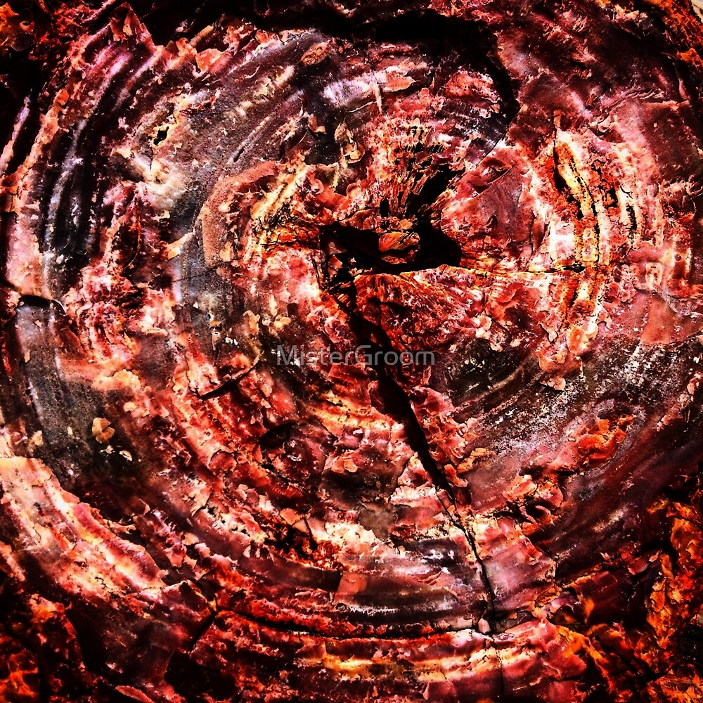 Petrified Tree Rings ~ Red by MisterGroom