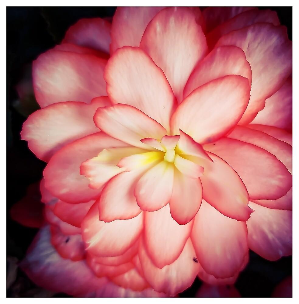 Pink Beauty by MBNerd2003
