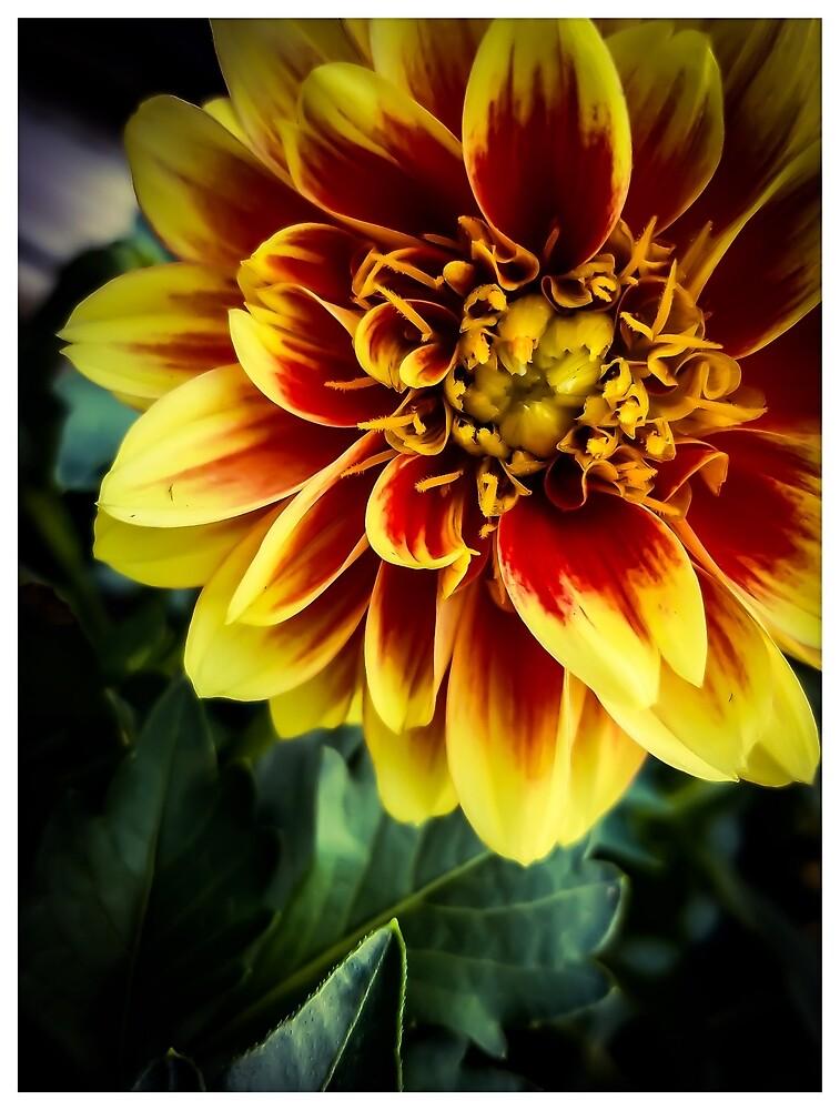 Flower 13 by MBNerd2003