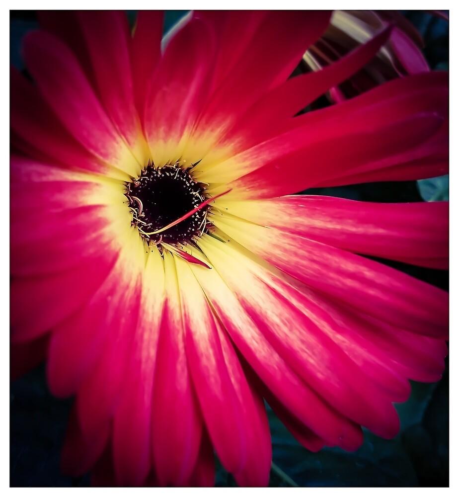 Flower 14 by MBNerd2003