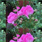 Pink Roses by Artbymilissa