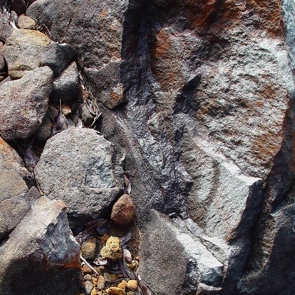 Rock, Tasmania by NataliePirotta