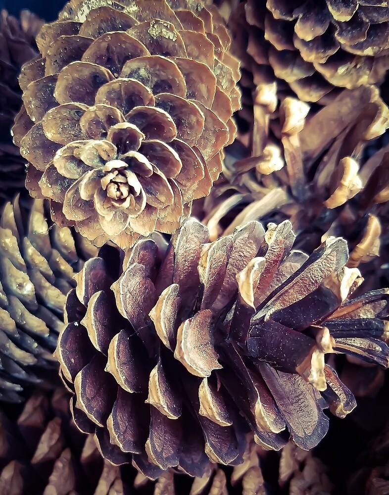 Pine Cones by MBNerd2003