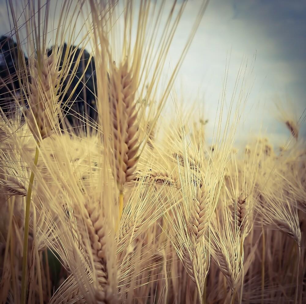 Wheat Grass 2 by MBNerd2003