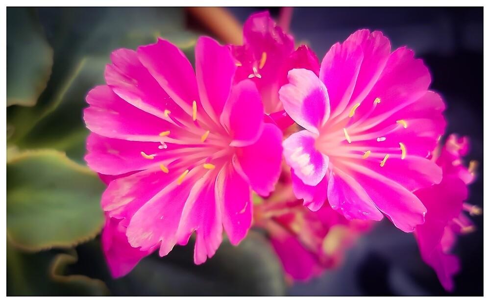 Flowers 7 by MBNerd2003