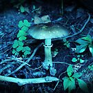 Lomography Mushroom Photography by Concetta Kilmer