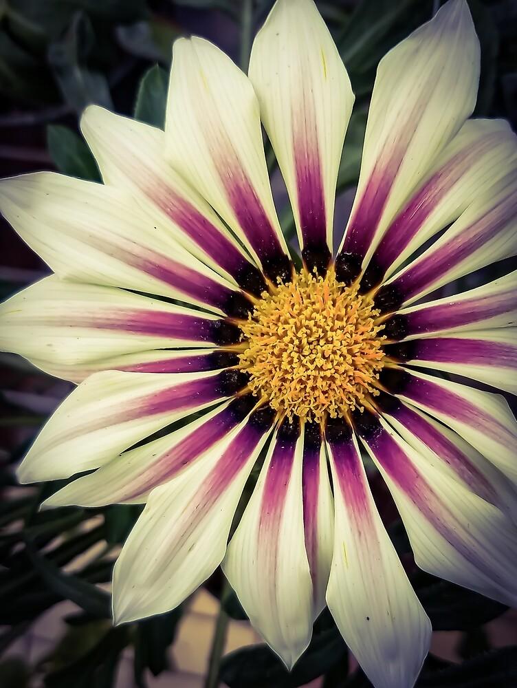Flower 22 by MBNerd2003
