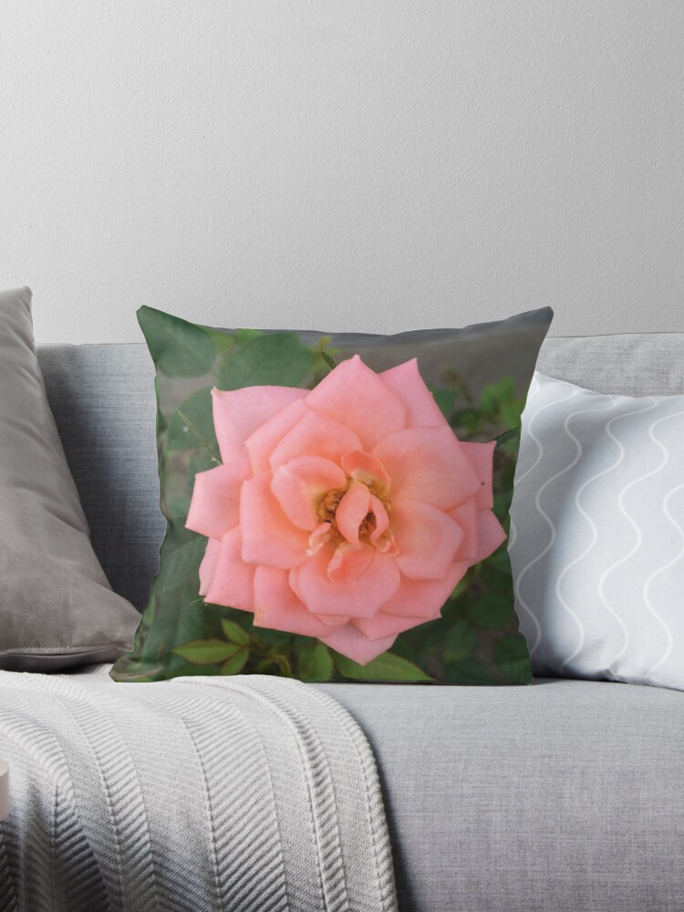 Little Pink Rose by SJSumner