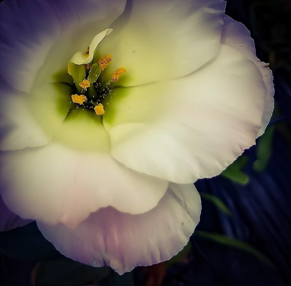 Flower 24 by MBNerd2003