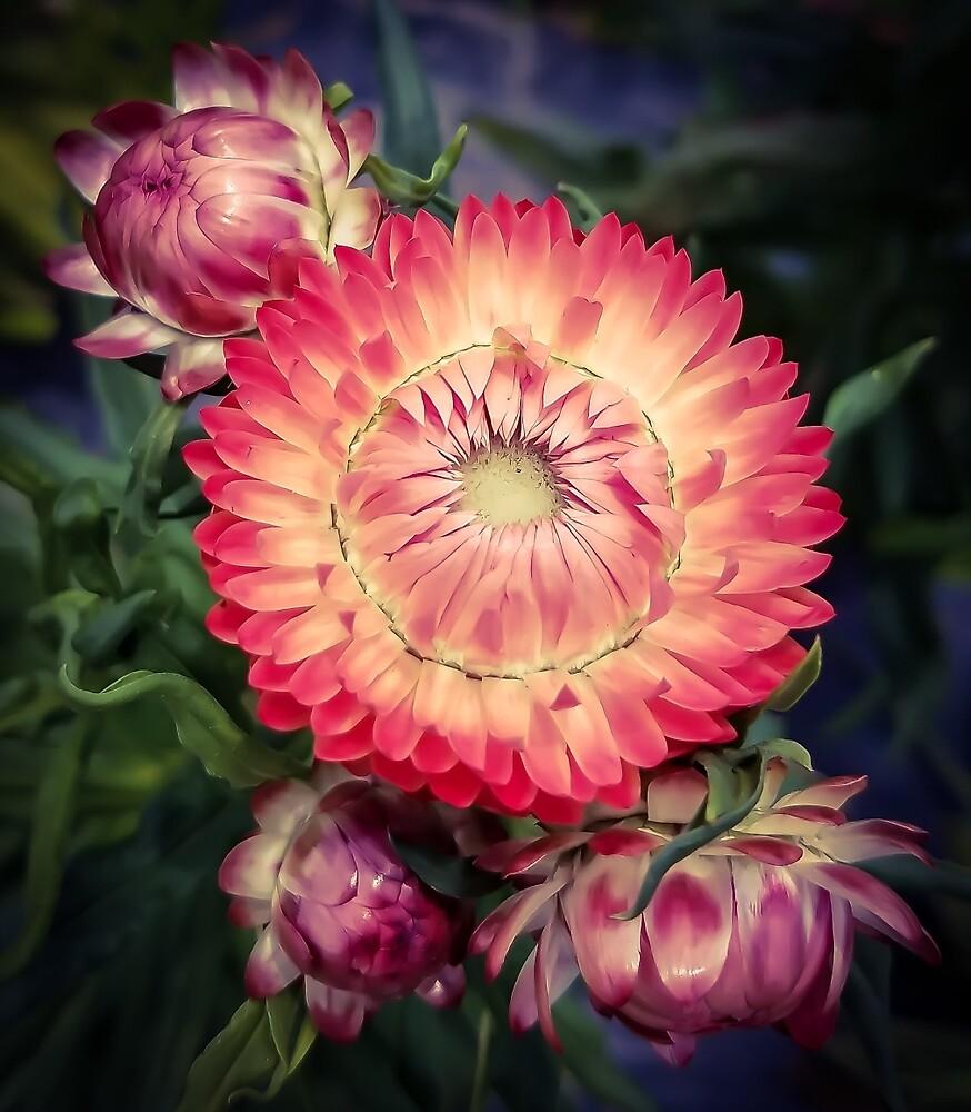 Flower 26 by MBNerd2003