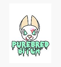 Purebred Bitch Photographic Print