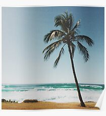 Palm Tree By The Beach  Poster
