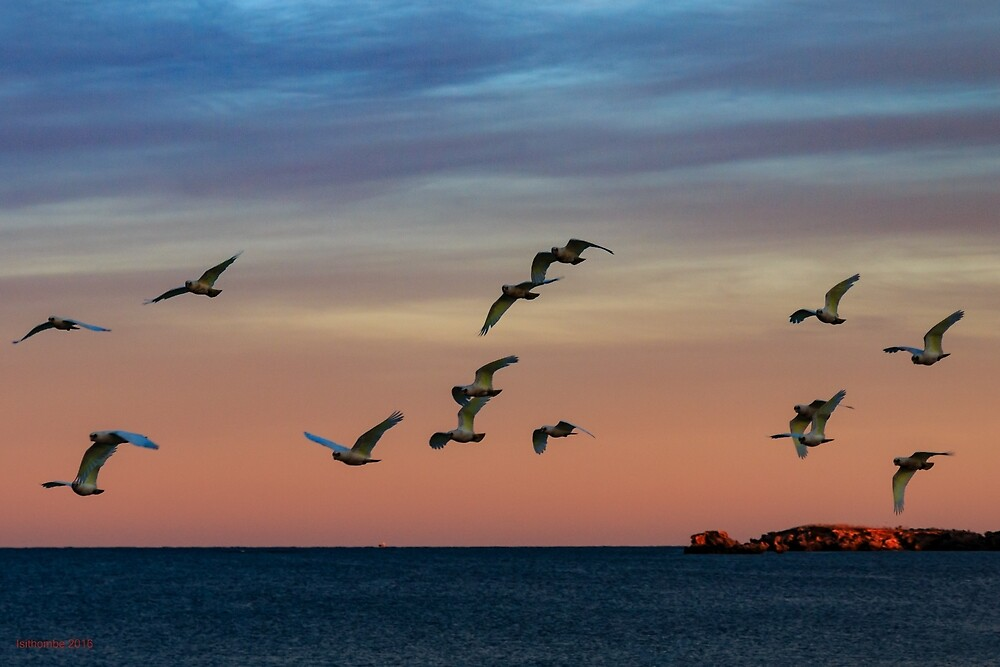 Sunrise Corellas by IsithombePhoto